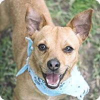 Adopt A Pet :: Tito - San Leon, TX
