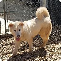 Adopt A Pet :: Rachel - Queenstown, MD