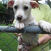Adopt A Pet :: RUMER - Williston Park, NY