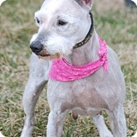 Adopt A Pet :: Izzy - Providence, RI