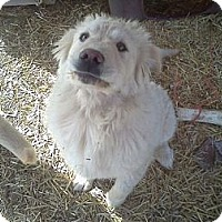 Adopt A Pet :: Dudley DoRight - Milford, CT