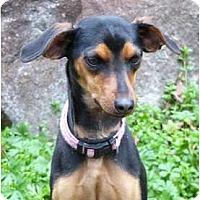 Adopt A Pet :: April - Mocksville, NC