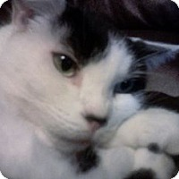 Adopt A Pet :: Spunky Baby - Summerville, SC