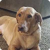 Adopt A Pet :: Sweet Pea (Maple) - Cumming, GA