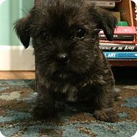 Adopt A Pet :: Fido-Pending Adoption - Omaha, NE