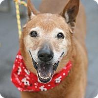 Adopt A Pet :: Bud - Canoga Park, CA