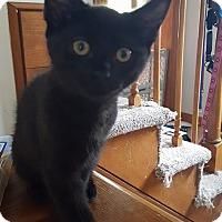 Adopt A Pet :: Nina 2 - Plainville, MA