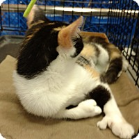 Adopt A Pet :: Lily - Jeffersonville, IN