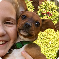 Adopt A Pet :: Rae - Alpharetta, GA