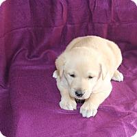 Adopt A Pet :: Gunner - Huntsville, AL