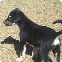 Adopt A Pet :: Twix meet me 3/10 - Manchester, CT