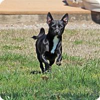 Adopt A Pet :: Yoda - Savannah, TN