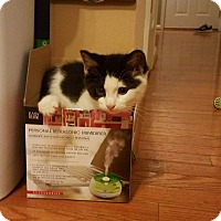 Adopt A Pet :: Oreo - Winchester, VA
