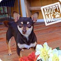 Adopt A Pet :: Khalaya - Fort Valley, GA