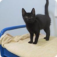 Adopt A Pet :: Dorothy - Indiana, PA