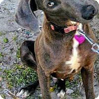 Adopt A Pet :: Gray - San Diego, CA