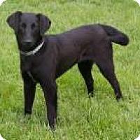 Adopt A Pet :: Zale - Fairfax, VA