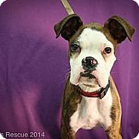 Adopt A Pet :: Super G - Broomfield, CO