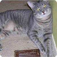 Adopt A Pet :: J.D. - Richmond, VA