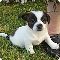 Adopt A Pet :: Minnie - Bakersfield, CA