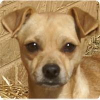 Adopt A Pet :: CiCi - Staunton, VA