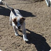 Adopt A Pet :: Toby - Peyton, CO