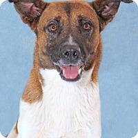 Adopt A Pet :: Patty - Encinitas, CA