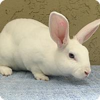 Adopt A Pet :: Whitey - Bonita, CA