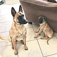 Adopt A Pet :: Aaron - Carlsbad, CA