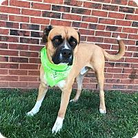 Adopt A Pet :: GARLAND - Lexington, NC