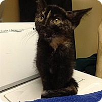 Adopt A Pet :: Mini Me - West Dundee, IL