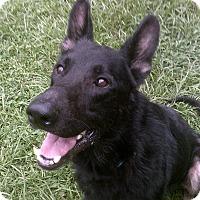Adopt A Pet :: Lobo - Green Cove Springs, FL