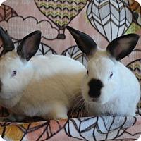 Adopt A Pet :: Suki & Korra - Watauga, TX