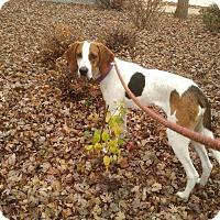 Adopt A Pet :: Yogi - Meridian, ID