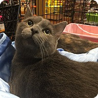 Adopt A Pet :: Jackson- Adoption Pending - Horsham, PA