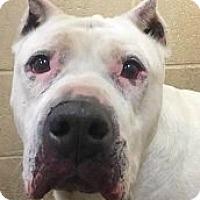 Adopt A Pet :: Esme - Springdale, AR