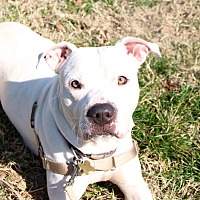 Adopt A Pet :: Kylo - Richmond, VA
