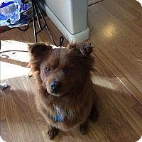 Adopt A Pet :: Ruby - Gig Harbor, WA