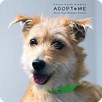Adopt A Pet :: Trudy - Edwardsville, IL