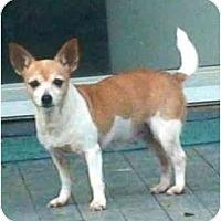 Adopt A Pet :: Eenie Meenie(Adopted!) - Houston, TX