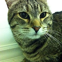 Adopt A Pet :: Loki - Port Hope, ON