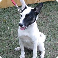 Adopt A Pet :: Spice - Jacksonville, FL