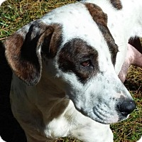 Adopt A Pet :: Rosalee - Ball Ground, GA