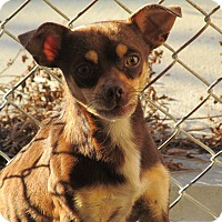 Adopt A Pet :: Wally - Ormond Beach, FL