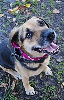 Rottweiler/Shepherd (Unknown Type) Mix Dog for adoption in Loxahatchee, Florida - Nana