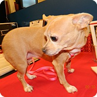 Adopt A Pet :: Day Z - Umatilla, FL
