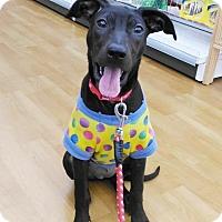 Adopt A Pet :: Salome - Castro Valley, CA