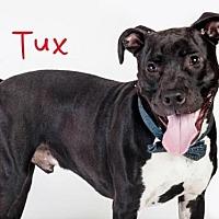 Adopt A Pet :: TUX - Sacramento, CA