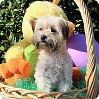 Adopt A Pet :: Bella - Modesto, CA