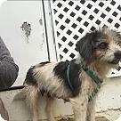 Adopt A Pet :: Dixie (ETAA)